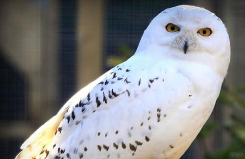 Owl Parliament 13