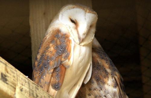 Owl Parliament 14