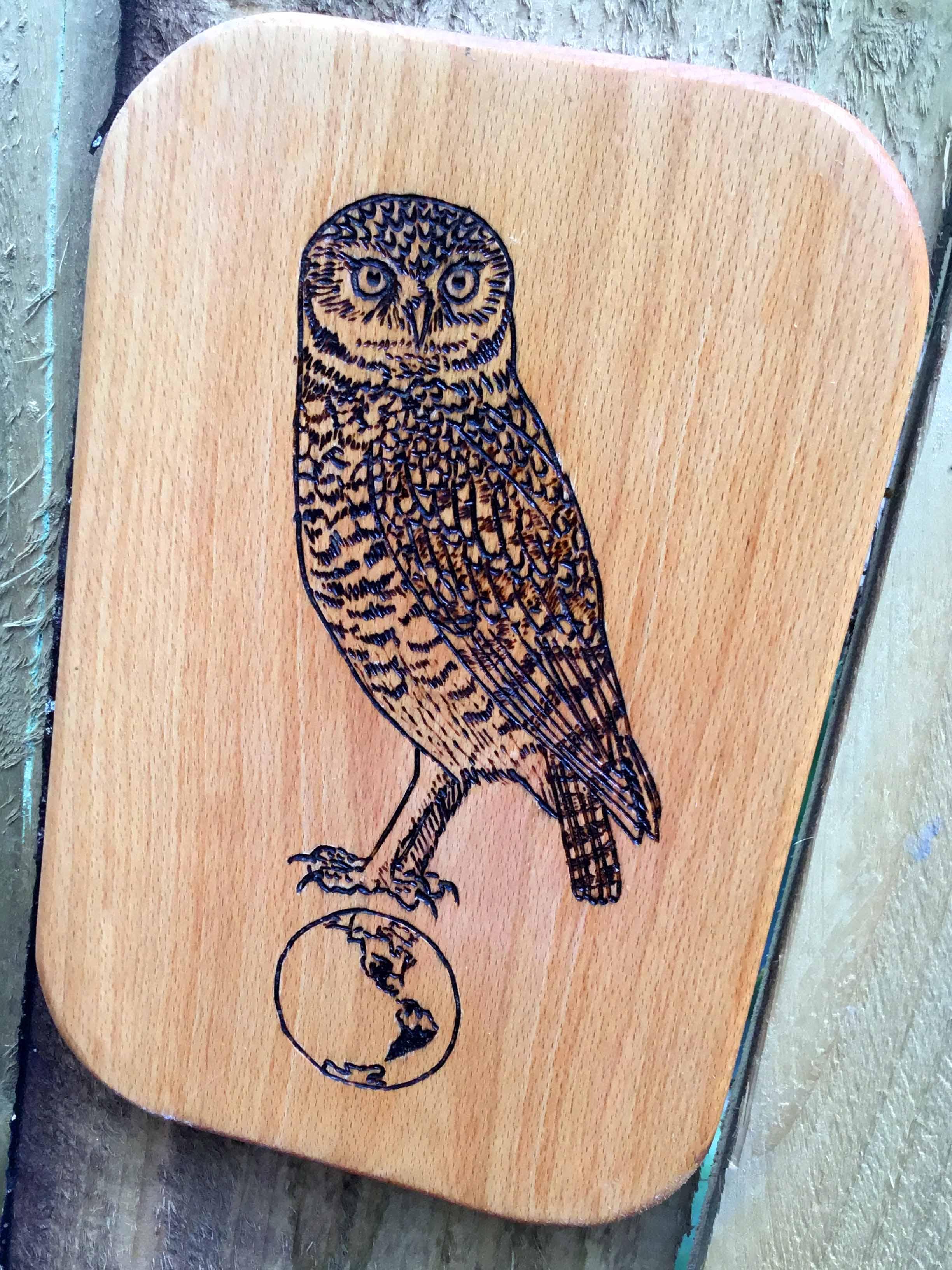 Owl Parliament 7